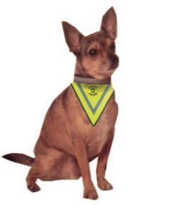 Insectshield Hundetørklæde på hund